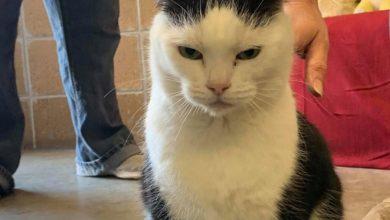 Photo of کیا آپ 'دنیا کی بد ترین بلی' کو گود لینا چاہیں گے؟