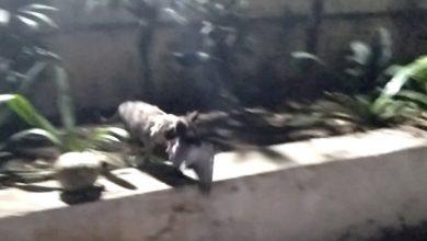 Photo of کیابلی کا حملہ جائز تھا؟